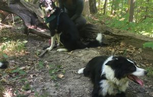 Feiya Shao with her dogs in a forest.